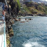 Young kids making a splash in Funchal harbour