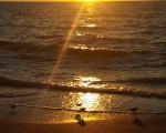 Birdlife along Florida's Gulf of Mexico shoreline as sun sets.